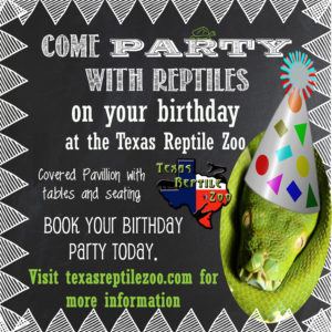 birthdayadvertisement